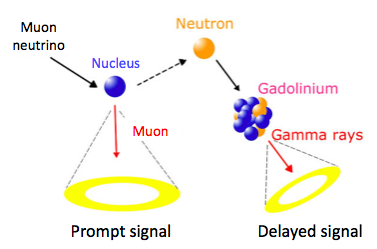 Neutrino interaction in the fiducial volume, neutron capture by gadolinium salts and subsequent photon emission (delayed signal).